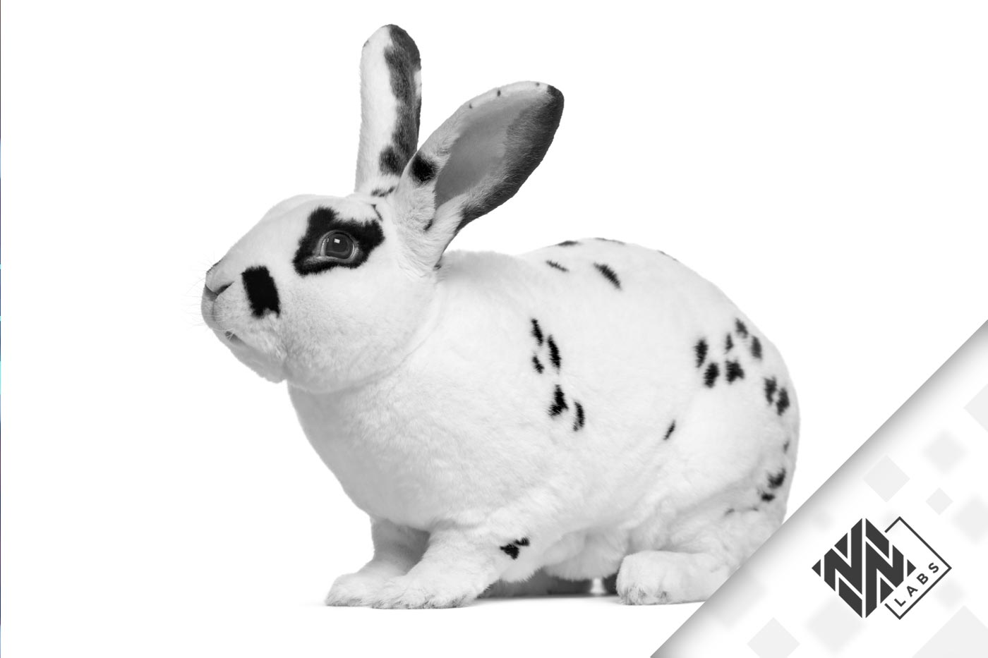 Bad Rabbit Highlights Employees' Role in Cyber Security Attacks