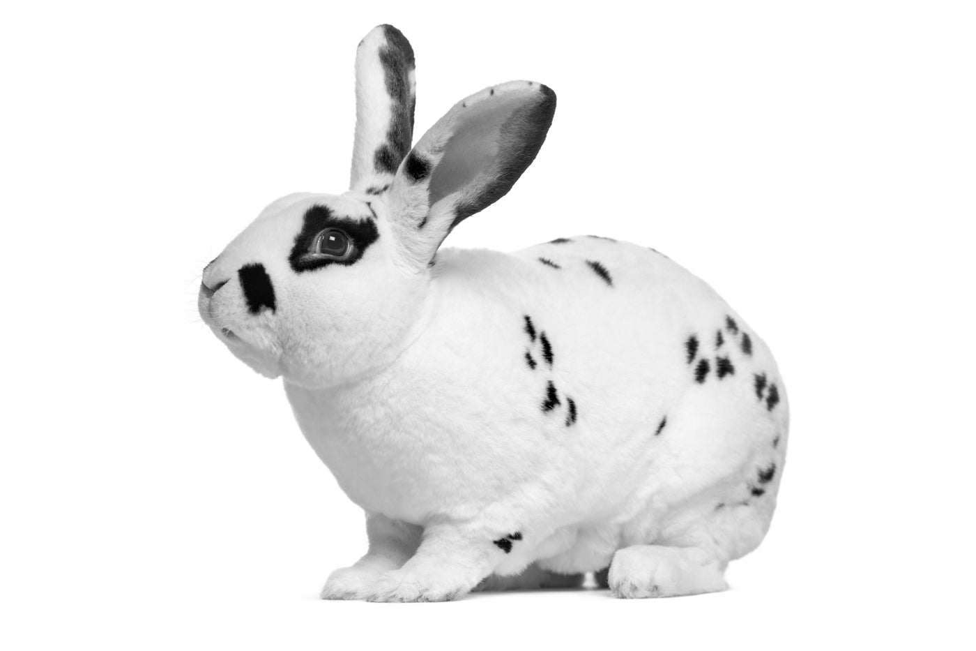 Bad Rabbit Highlights Employees' Role in Cybersecurity Attacks